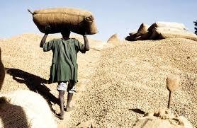 Campagne agricole 2105 : Le Cncr  veut du concret dés ce 16 novembre