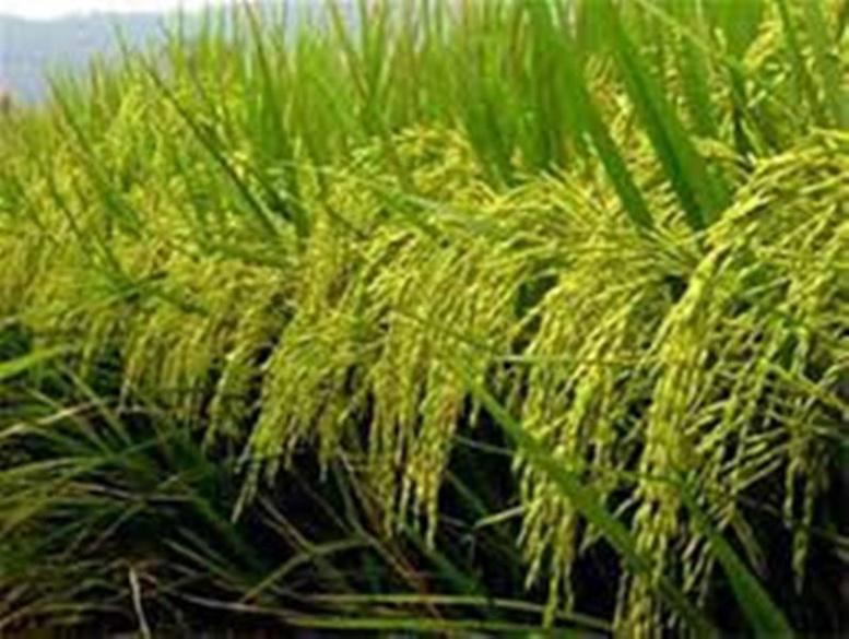 La production agricole a augmenté en volume de 57%, par rapport à 2014