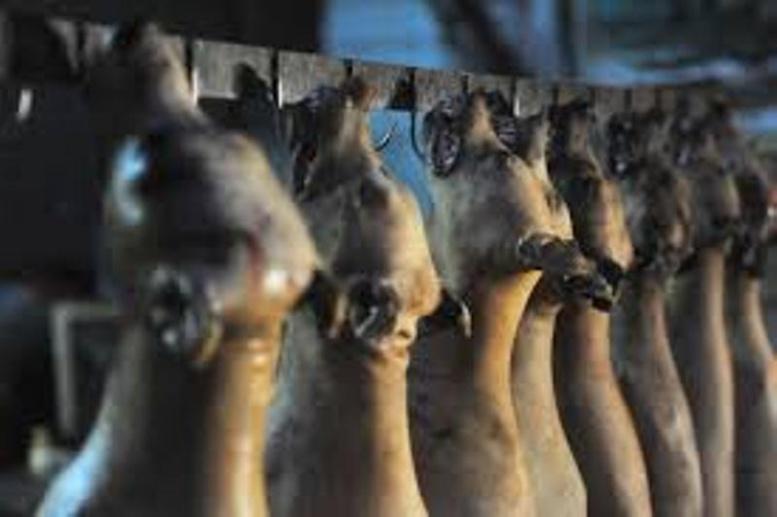 Ziguinchor: un réseau de vente de viande de chien démantelé