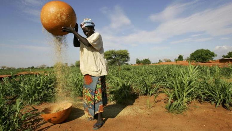 Niger: les paysans victimes des conséquences du changement climatique