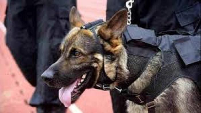 Lutte contre le terrorisme: des chiens renifleurs à l'aéroport pour fouiller les colis