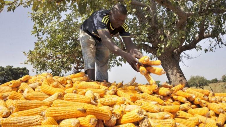 Le FMI salue les efforts de bonne gouvernance du Mali