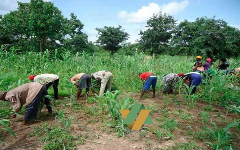 Sénégal-Agriculture : 20 Milliards additionnels seront investis dans le PRODAC en 2016