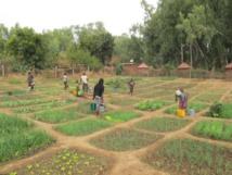 Mali: Teriyabougou, un lieu d'inspiration