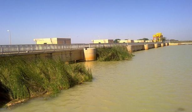 Riziculture : La JICA arme le Sénégal pour booster la  productivité du riz dans la vallée du fleuve