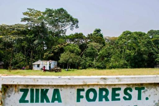 Zika: la soudaine notoriété de la forêt d'Ouganda où le virus a été découvert