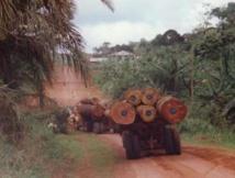 «Menaces sur les forêts africaines»: La responsabilité du groupe Bolloré