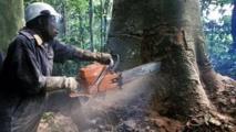 En RDC les Ong demandent au gouvernement le maintien du moratoire sur l'attribution de licences d'exploitation forestière (archives)