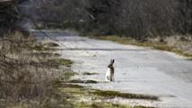 Trente ans après la catastrophe, la nature reprend ses droits à Tchernobyl