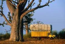 Tourisme sénégalais : la menace terroriste nuit à ce secteur selon le Dg de la Sapco.