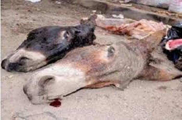 Les alertes du service de l'élevage de Dakar : « Il y a risque de circulation de 55 tonnes de viande d'âne à Dakar »