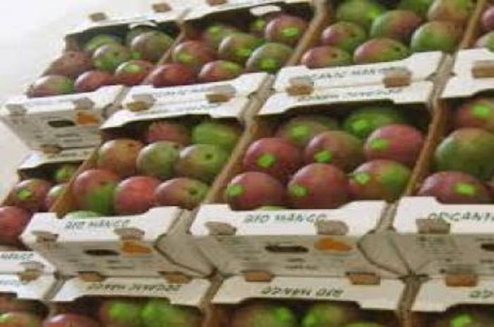 Filière de la mangue : le gouvernement veut en faire un levier de l'Economie.