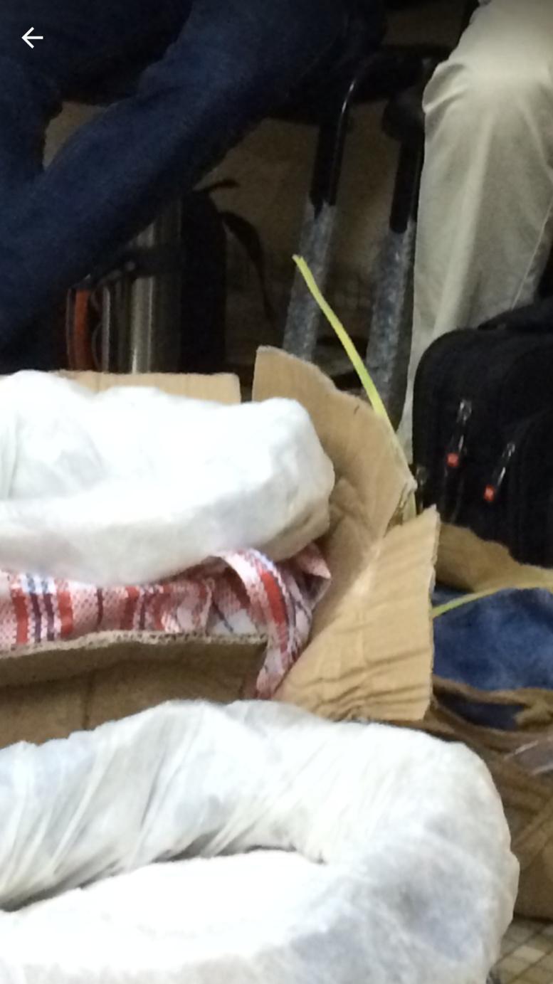 3 passagers en provenance de la Chine: la Douane saisit 33, 58 kg d'amphétamines, 212 kg de chanvre indien et 804 bonbonnes de gaz