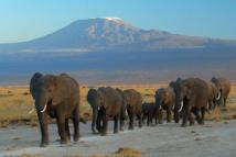 Washington interdit le commerce de l'ivoire pour sauver les éléphants d'Afrique