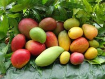 Semaine de la mangue : Le Sénégal plébiscité pour présider l'ARMAO
