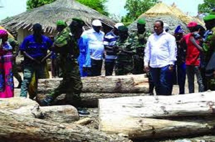 Kolda-Coupe illicite de bois 22 personnes arrêtées et déférées au Parquet