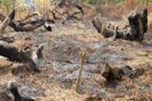 """""""La coupe abusive de bois n'est pas l'apanage de la Casamance"""", par Pr Demba Sow"""