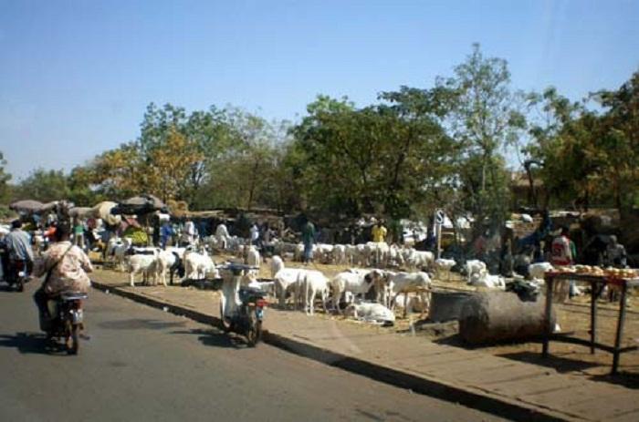 Reportage Tabaski: risque de pénurie de moutons, les vendeurs sonnent l'alerte
