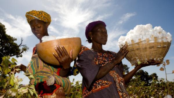 Mali: le secteur du coton en bonne voie