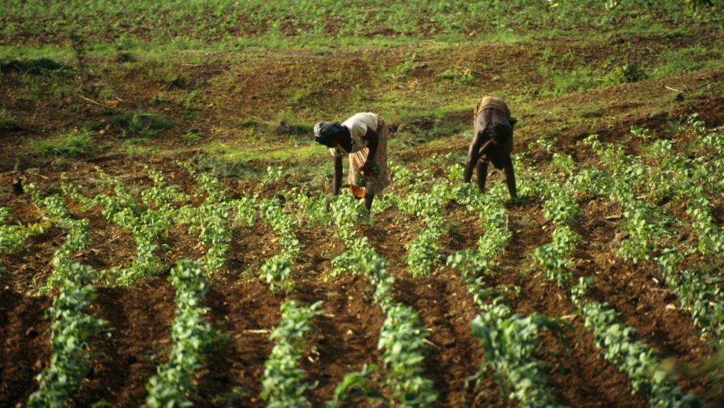 Nourrir l'Afrique, le grand défi du XXIe siècle