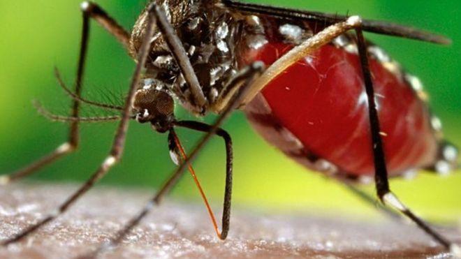 Une épidémie de dengue au Burkina