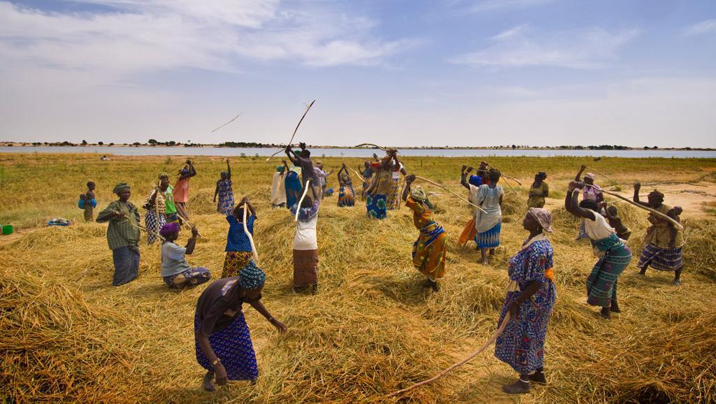 Mali: malgré une production record de céréales, les revenus peinent à décoller