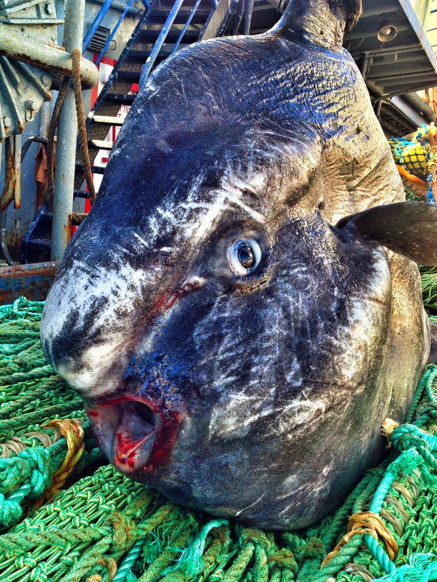 Photos Un pêcheur russe dévoile ses terrifiantes prises