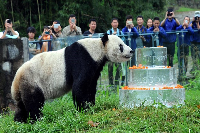 Le plus vieux panda mâle du monde est mort en Chine