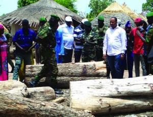 Crise gambienne: une occasion pour les délinquants de reprendre la coupe de bois