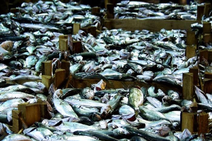 Grève des mareyeurs: le marché aux poissons confié au ministère de la Pêche