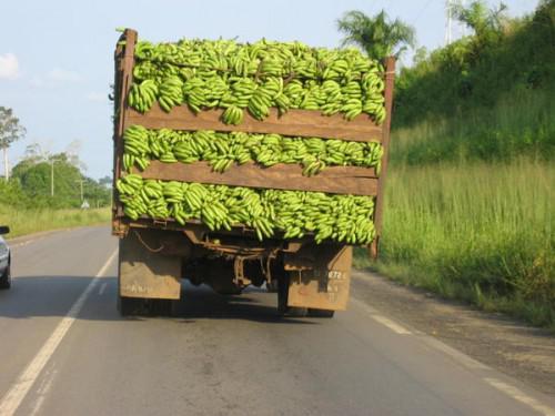   Le Cameroun classé 5è producteur mondial de banane