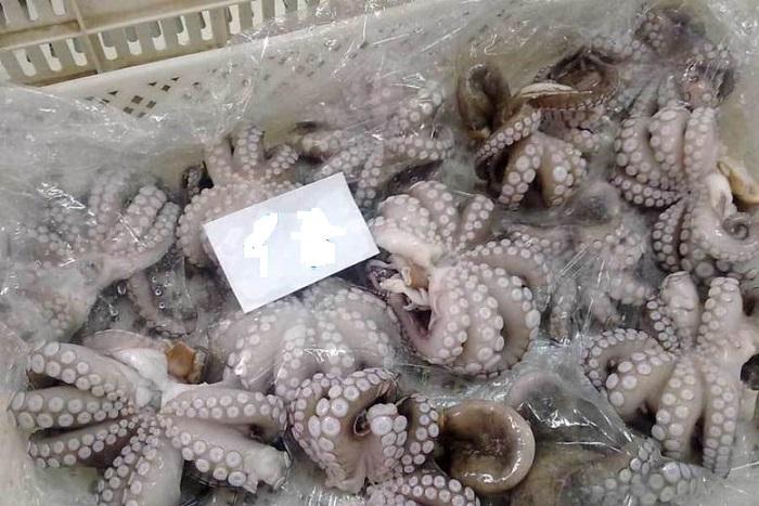 Propulser la pêche au poulpe : le Sénégal et le Japon unissent leur force