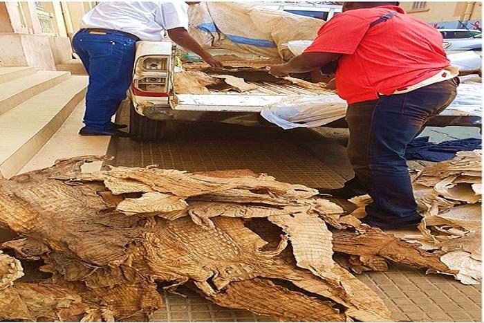 Trafic d'espèce protégées : Mbacké Thiam et Ibrahima Sacko condamnés