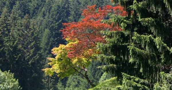 Biodiversité : il existe 60 065 espèces d'arbres sur Terre