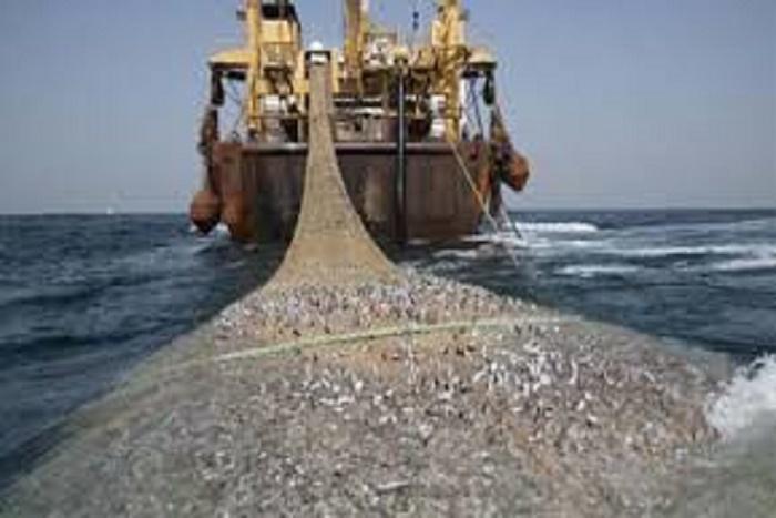 Pêche illicite : 145 milliards de francs Cfa de pertes pour le Sénégal