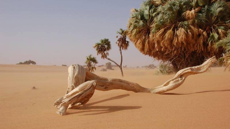 Dakar accueille la 4ème édition des Scènes Expérimentales du 15 au 20 mai 2017