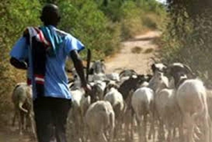 L'Etat durcit encore la répression sur le vol bétail: pas de sursis pour les voleurs, l'amende multipliée par 5