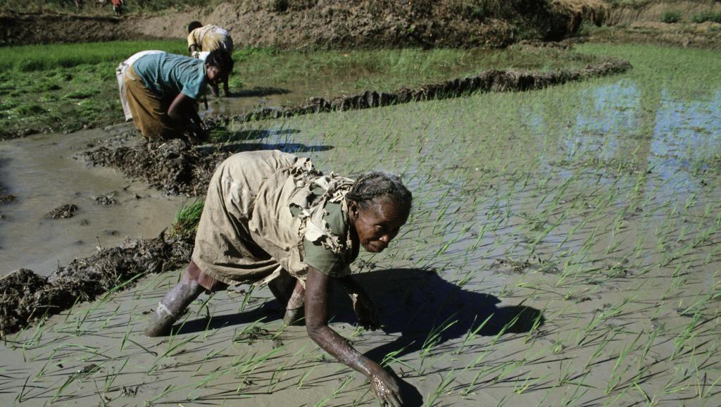 Madagascar: l'augmentation du prix du riz inquiète les consommateurs
