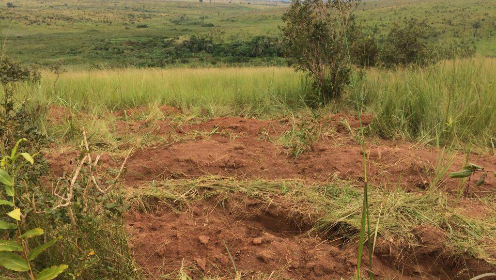 Violences au Kasaï en RDC: le Conseil des droits de l'Homme accusé de passivité