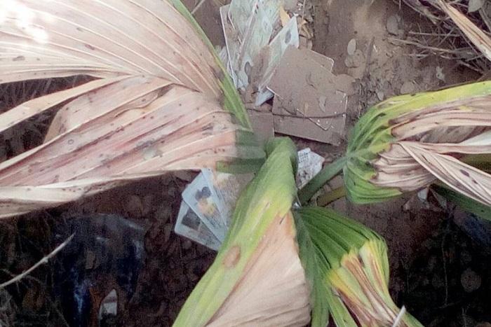 Kaolack-La Dic arrête 3 suspects dans l'affaire des cartes d'électeurs découvertes