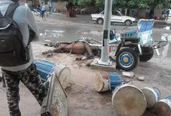 Incident à Louga: un cheval meurt électrocuté, le caléchier sauvé
