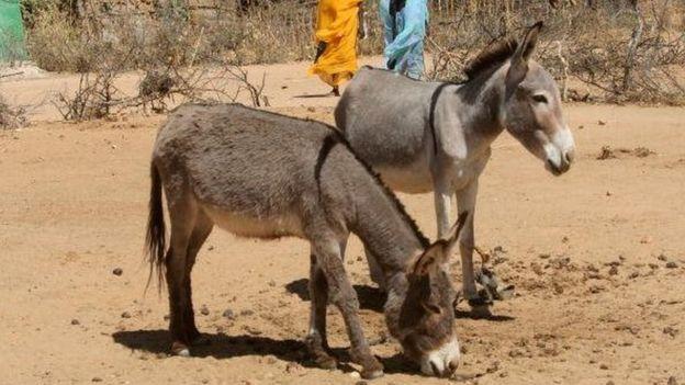 Tchad : un réseau de trafics de viande démantelé