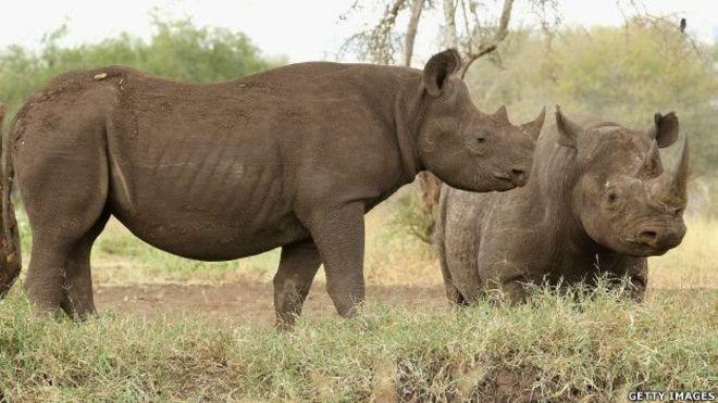 Une femme arrêtée avec des cornes de rhinocéros