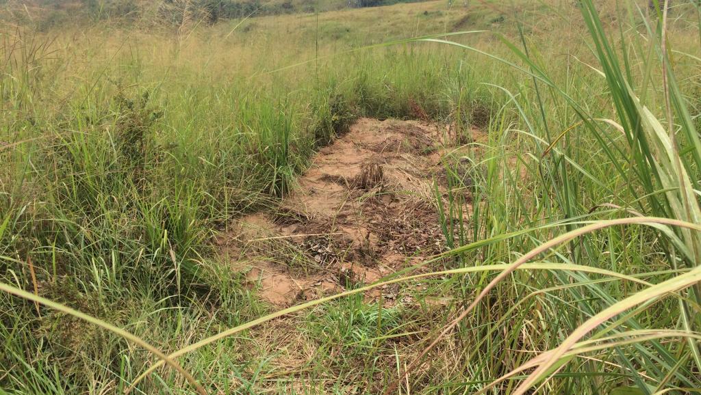 RDC: il y a un an, la mort du chef Kamuina Nsapu au Kasaï