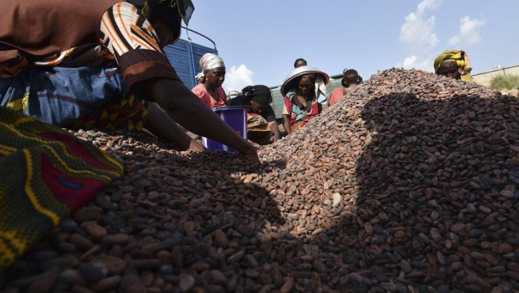 Côte d'Ivoire: du cacao illégal fourni aux grands noms du chocolat