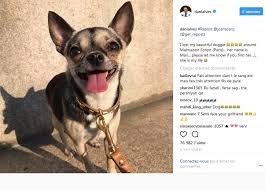 Dani Alves a perdu sa petite chienne et lance un appel sur Instagram pour la retrouver