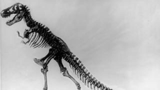 Lesotho : découverte d'un dinosaure géant