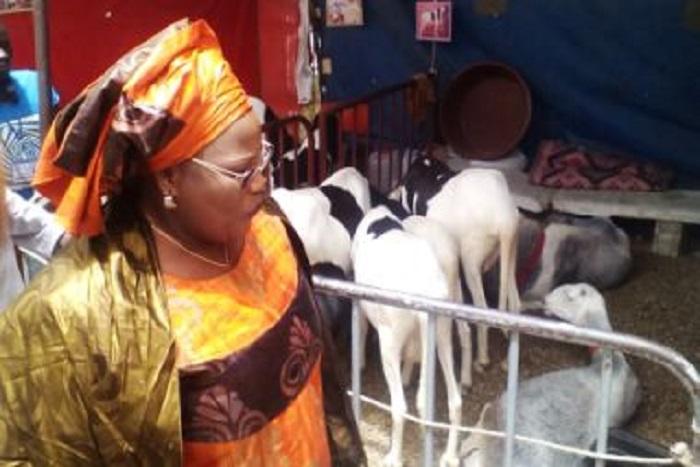 «457 000 moutons en provenance de la Mauritanie et du Mali contre 329 000 en 2016 » (Ministre)