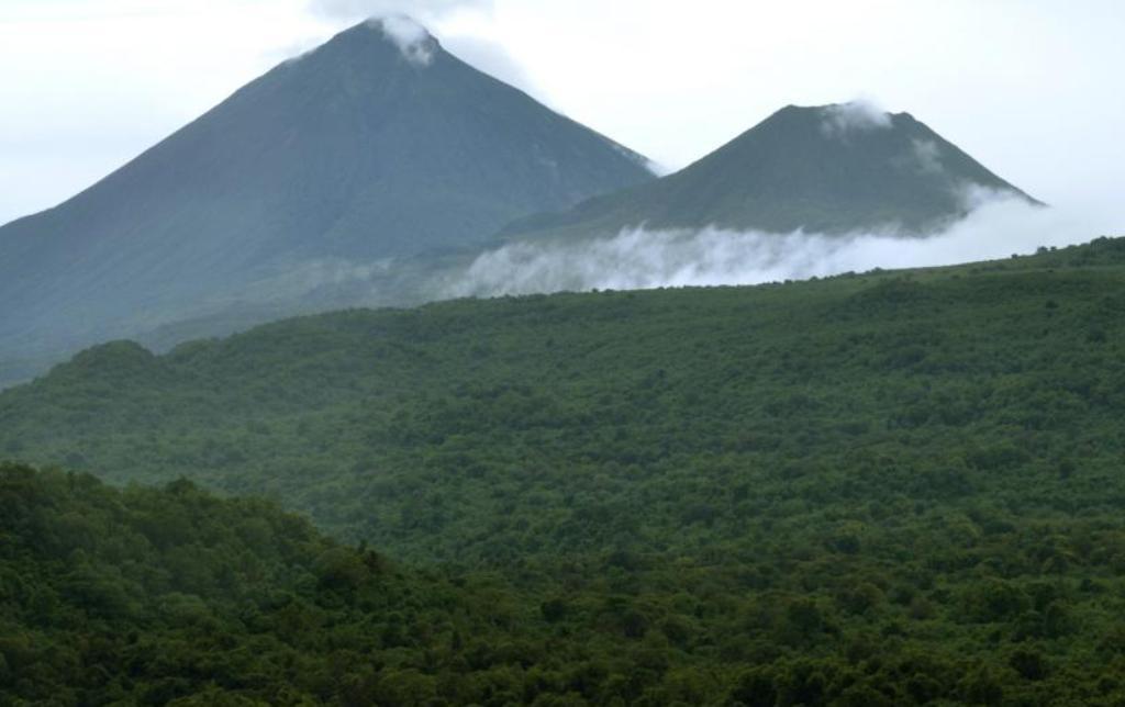 RDC: la possible levée du moratoire sur l'exploitation forestière fait polémique