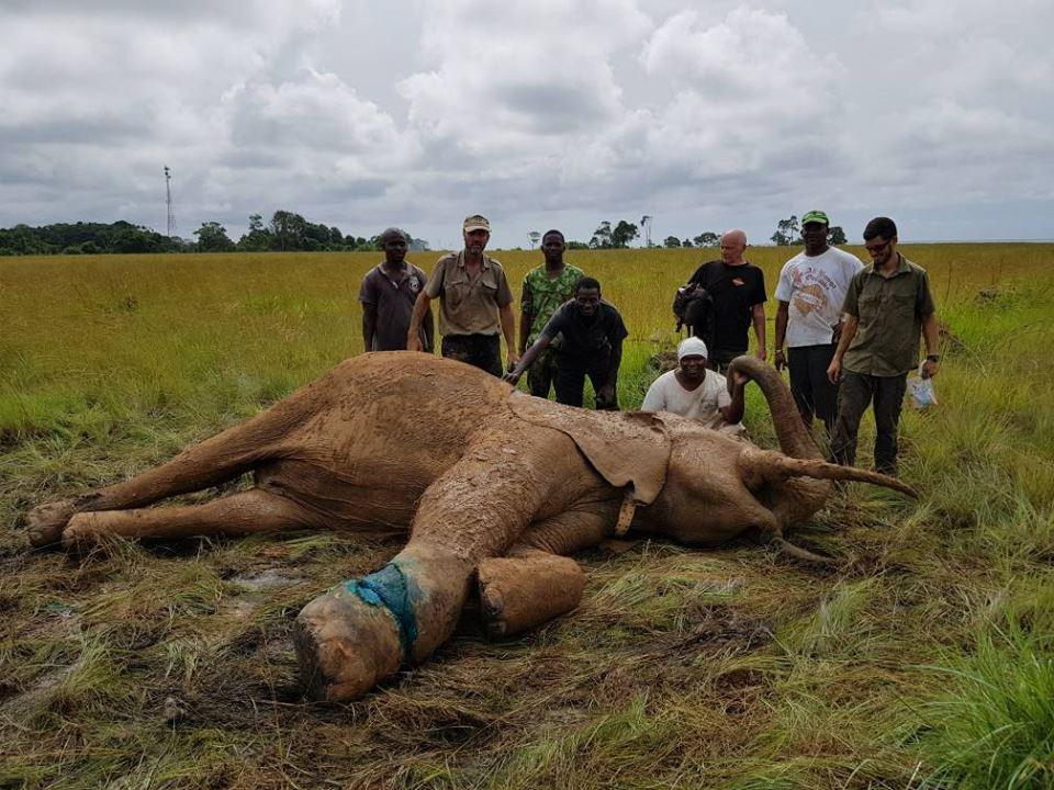 Le Gabon pleure un de ses plus célèbres éléphants